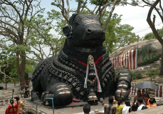 chamundi-hill-bull-statue